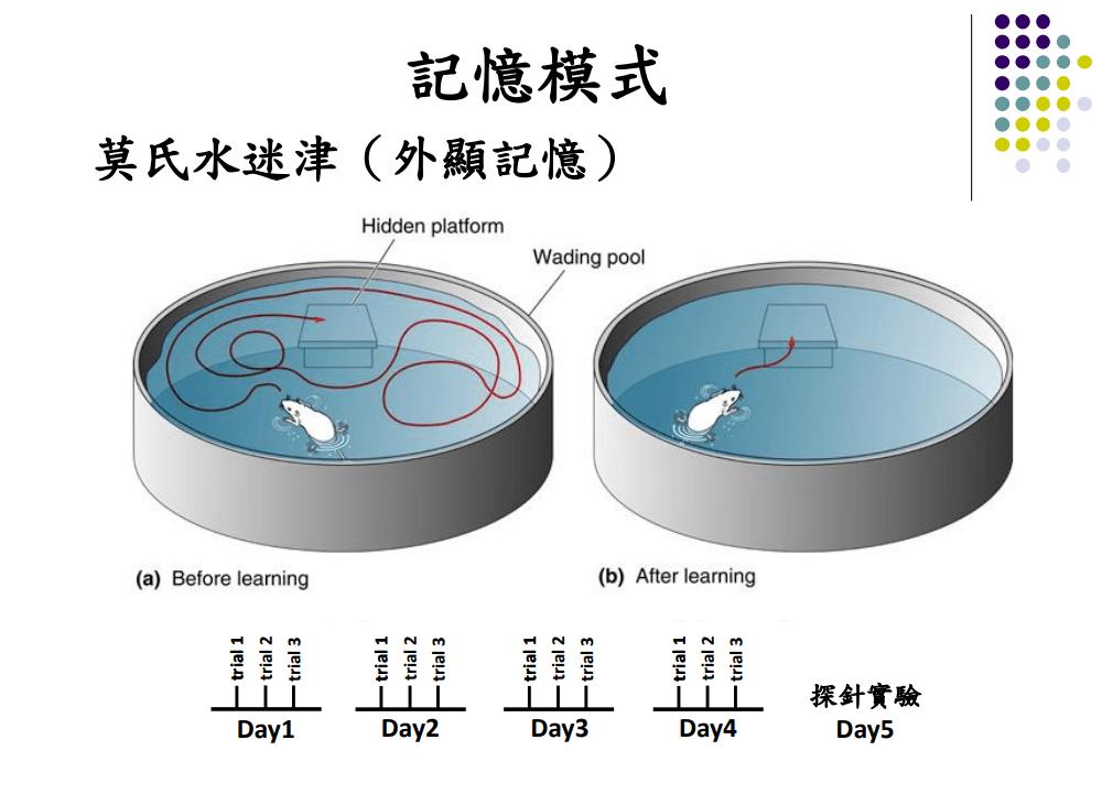 PPLs補腦的研究與實驗(莫氏水迷津測)數據資料1