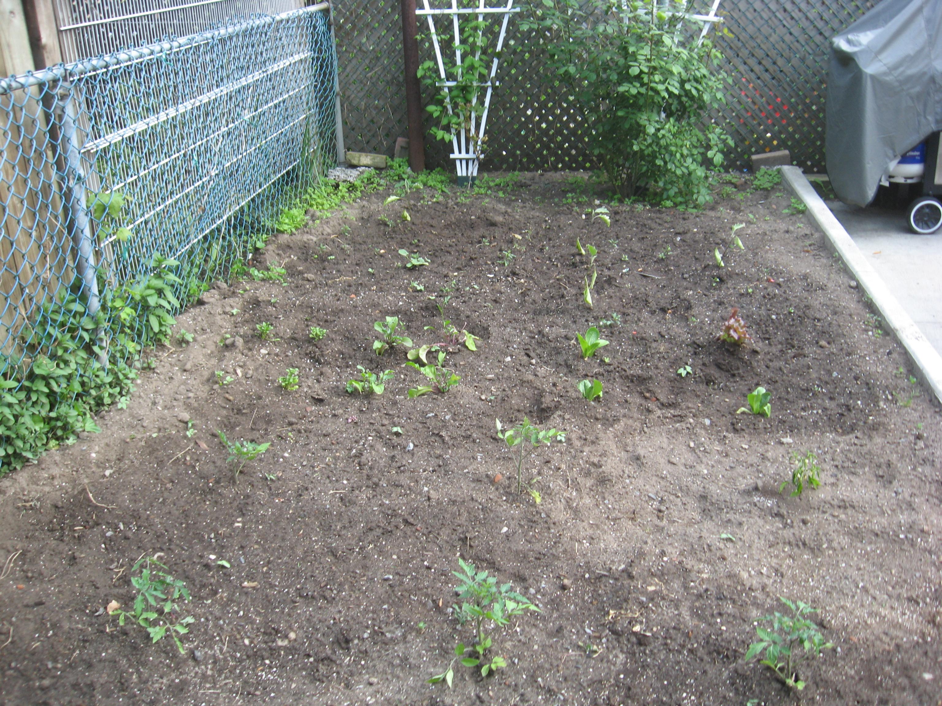 The Garden Plot - Week 2
