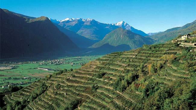 sertoli salis grumello vineyard