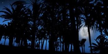 in da jungle at night