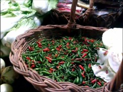 bohol fish market