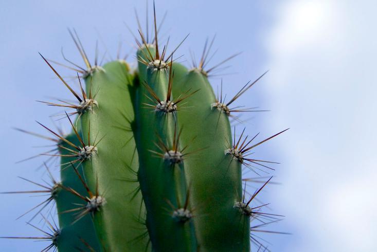 Mengenal Tanaman Kaktus  MAJALAH KELUARGA