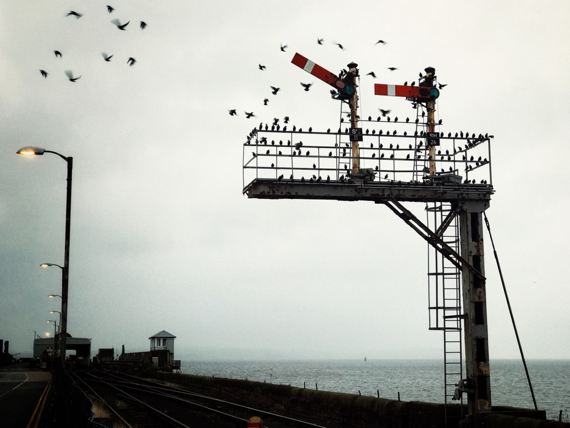 Starlings roosting on the semaphore signal outside Stranraer railway station