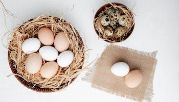 4大蛋類比較