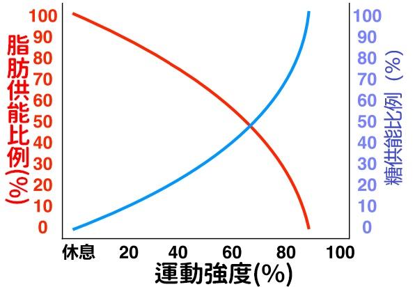 """【""""燃脂""""科學指南】如何運動才是最燃脂呢?"""