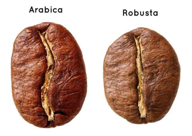 咖啡豆 - 阿拉比卡和羅布斯塔的差別