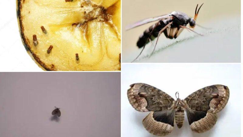 6種家居常出現的小昆蟲,到底是什麼?教你安全有效驅蟲方法‼