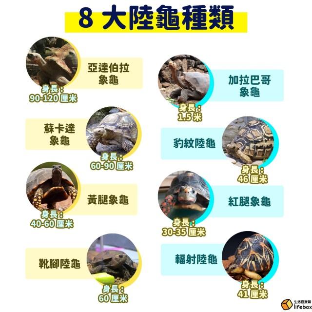 8大陸龜種類