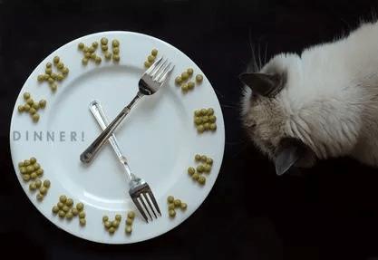 貓咪一天吃幾餐