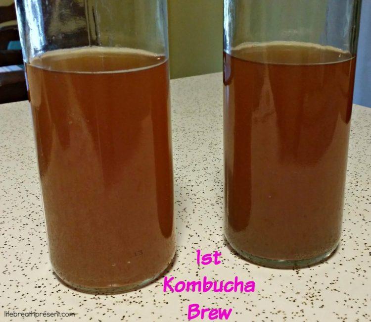 kombucha, health, wellness, fermentation, fermented drink, fermented food, brew, tea, drink