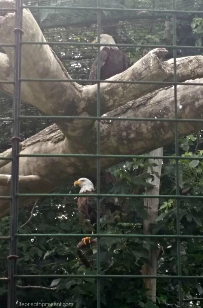 bird, eagle, park