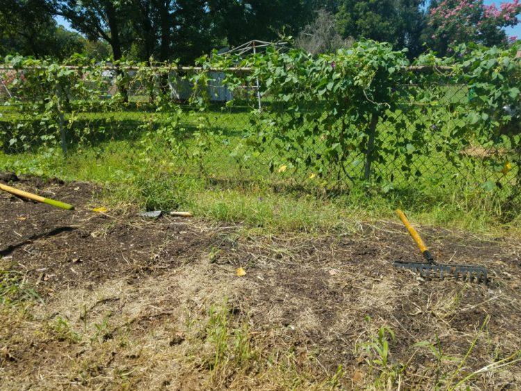 garden, gardening, weeds, trying, grow, growing, food