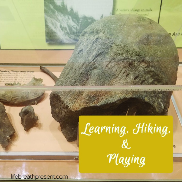 elephant joint, bones, fossils, learning, travel, adventure, family, history, mountains, roan mountain