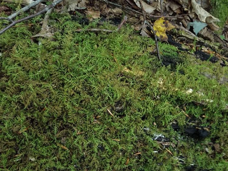 moss, hiking, adventure, travel, fun, family, outdoors, nature, mountain, nature