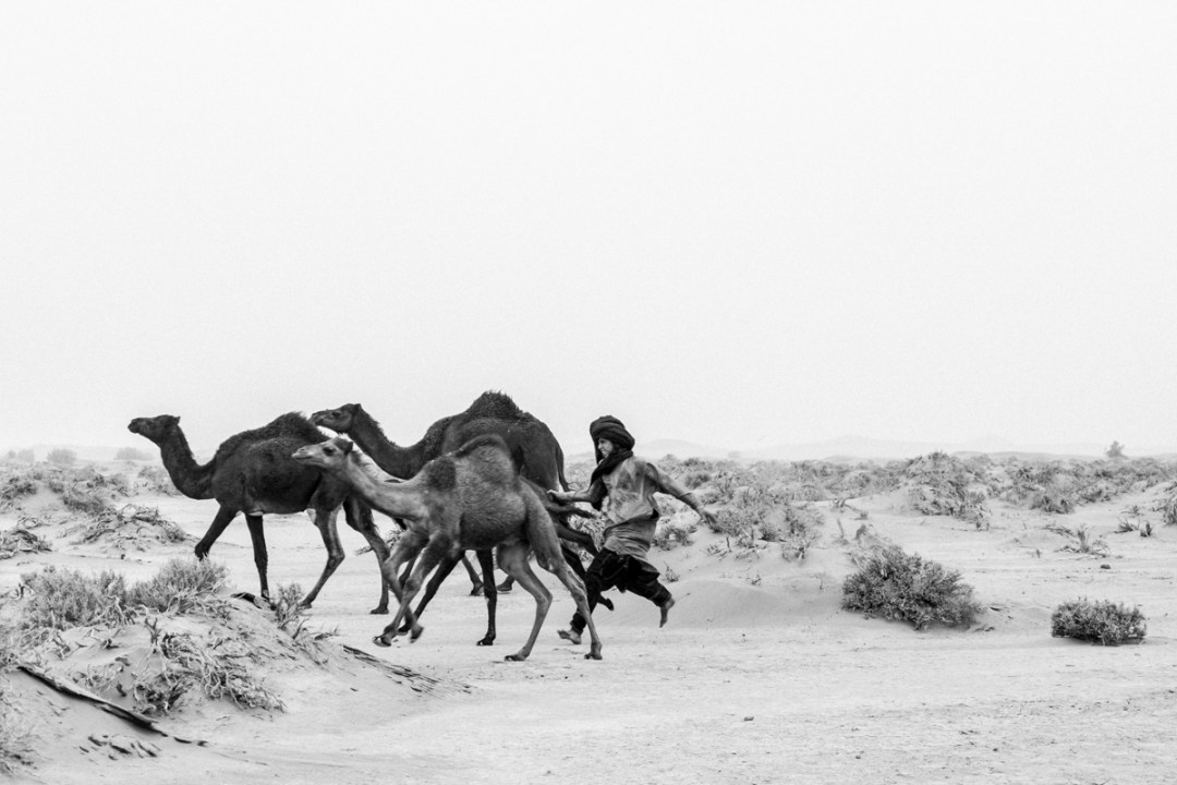 wild-morocco-saara-desert-life-by-lufe-nomad-nomades-marrocos-4