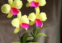 paper-orchid-flowers
