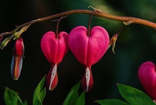 gratitude heart flower