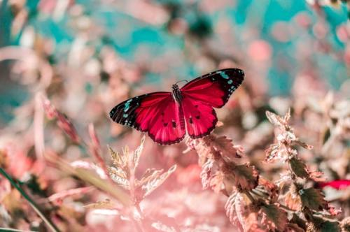 challenges as opportunities life coach life coaching pink butterfly