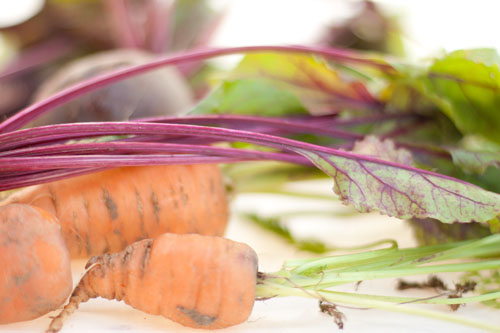 carrots and beets - garden fresh