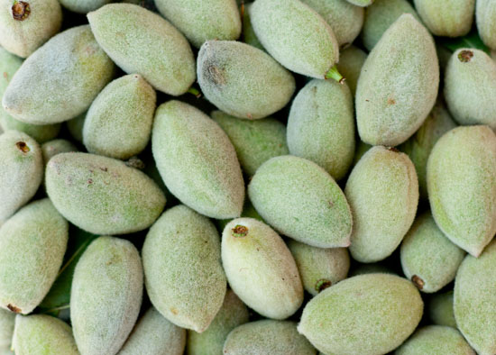 green almonds with fuzzy hulls or shells