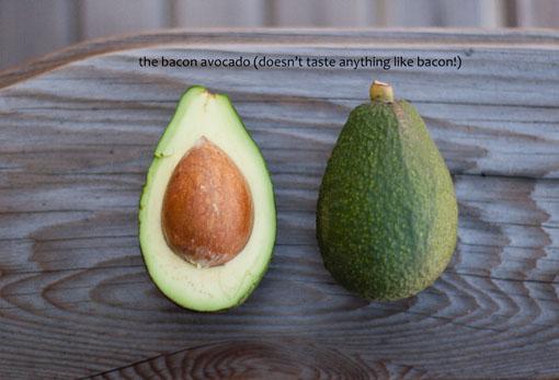 the Bacon avocado