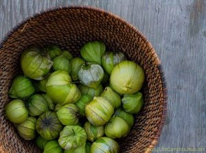 tomatillos harvested out of season