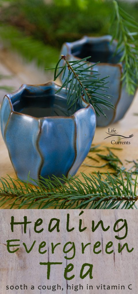 Healing Evergreen Tea Recipe to help sooth a cough