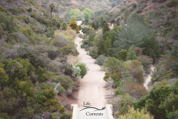 Can't Miss Activities on Catalina Island - the Botanical Gardens