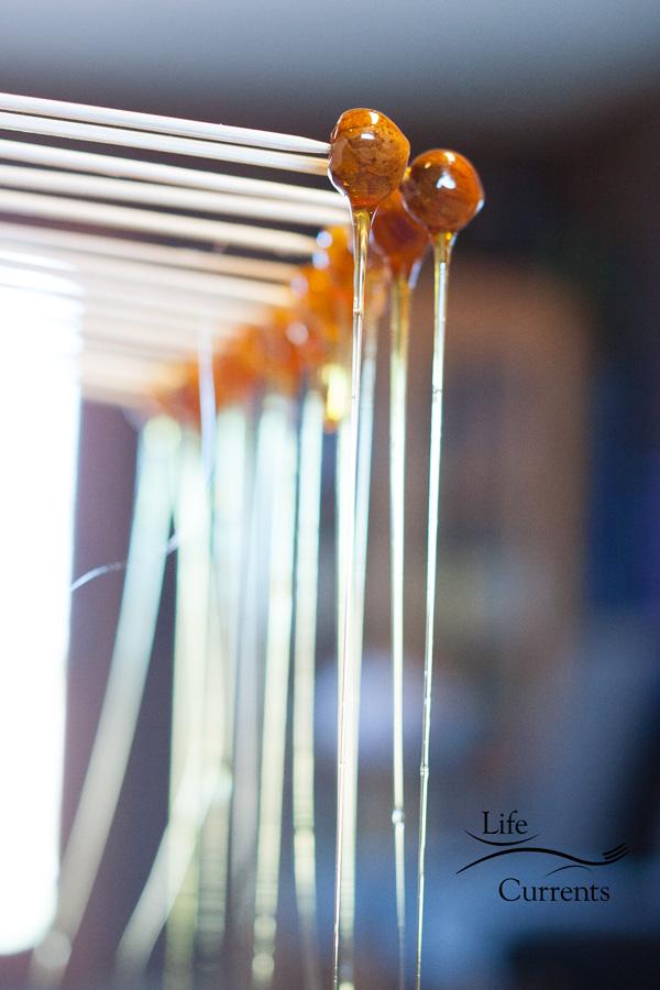 Candied Hazelnuts - a beautiful dessert garnish
