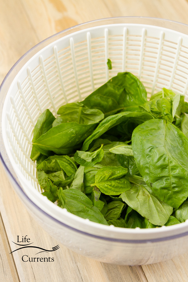 fresh basil leaves in a salad spinner on a wooden background