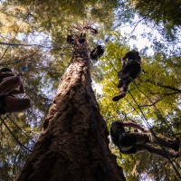Tree Climbing on Whidbey Island