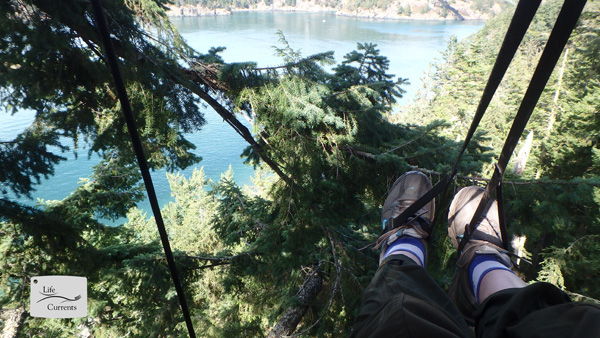my feet suspended in a tree at the top of a 200 foot tall coastal douglass fir tree