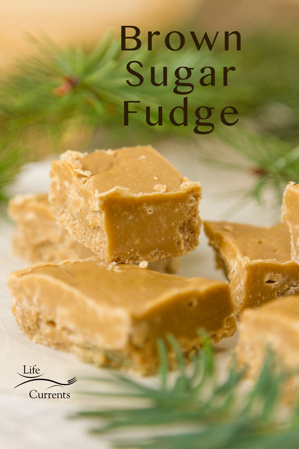 pieces of brown sugar fudge with some fir branches around them