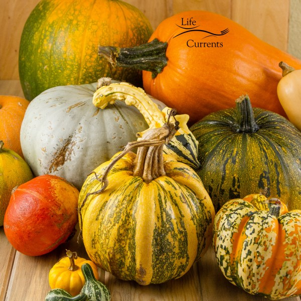 Fall pumpkins, squash, and gourds