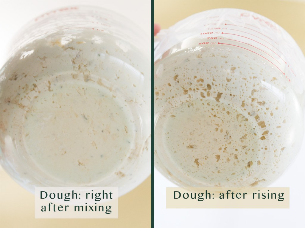 two images comparing rising dough. Left: title on image Dough: right after mixing. Right: Dough: after rising. Both from the underside of the cup