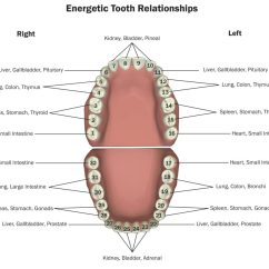 Diagram Of Mouth With Teeth Numbers Pioneer Mixtrax Avh X2600bt Wiring 101 Healthy And Gums Indicate A Body