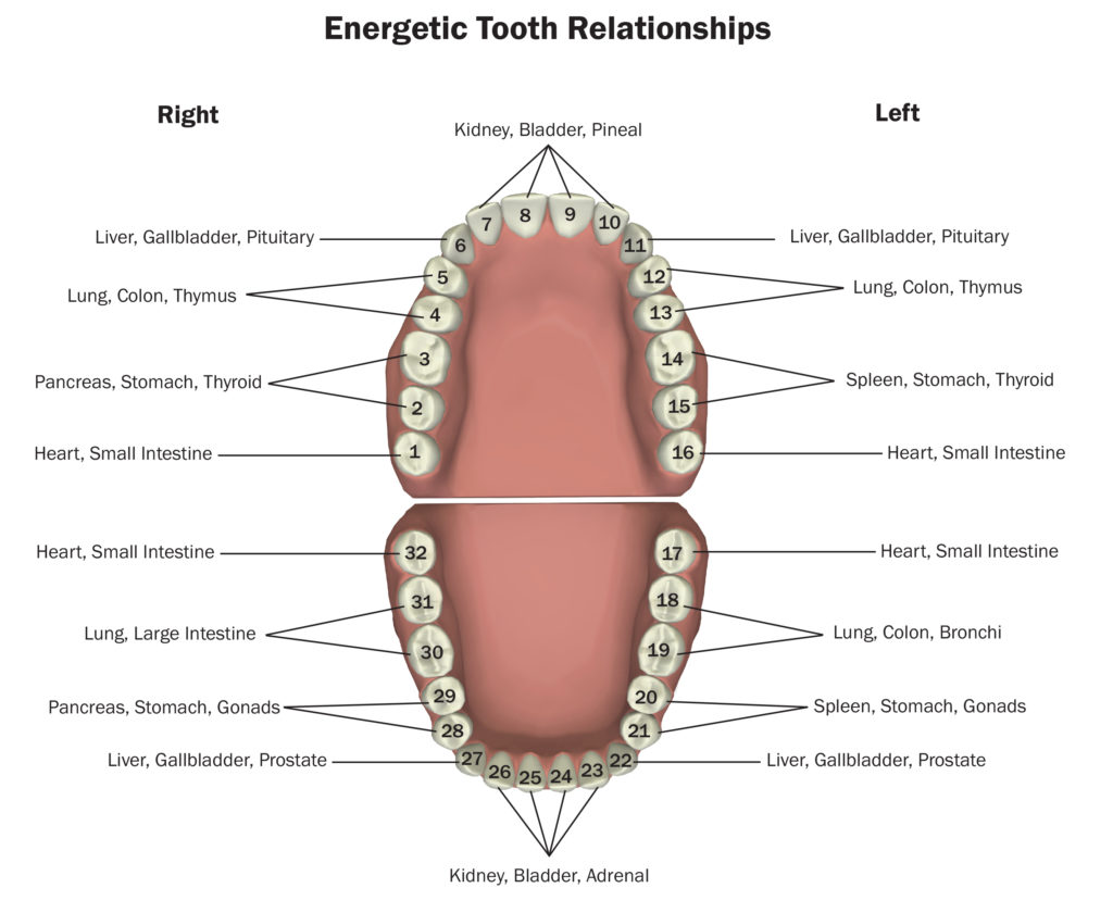 diagram of teeth and their numbers wiring for light switch receptacle 101 healthy gums indicate a body