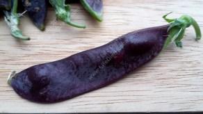 Luscious purple pea!