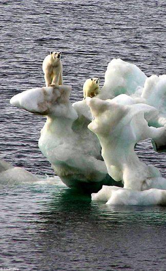 globalwarming-bears