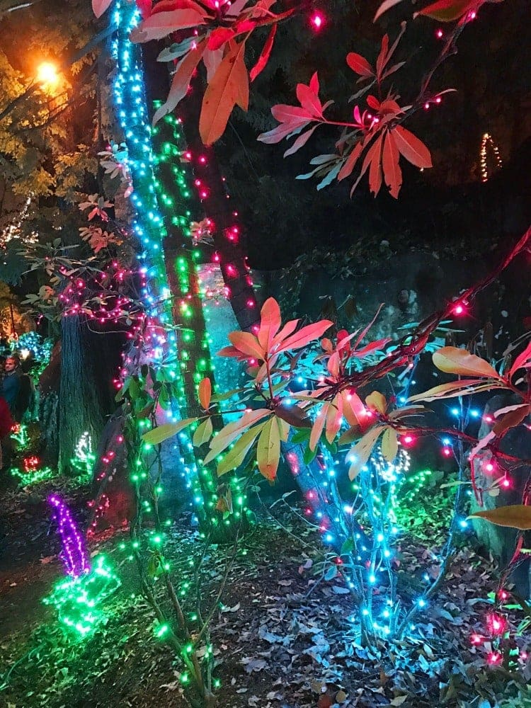 experience rock city s enchanted garden of lights life family fun - Christmas Lights Chattanooga