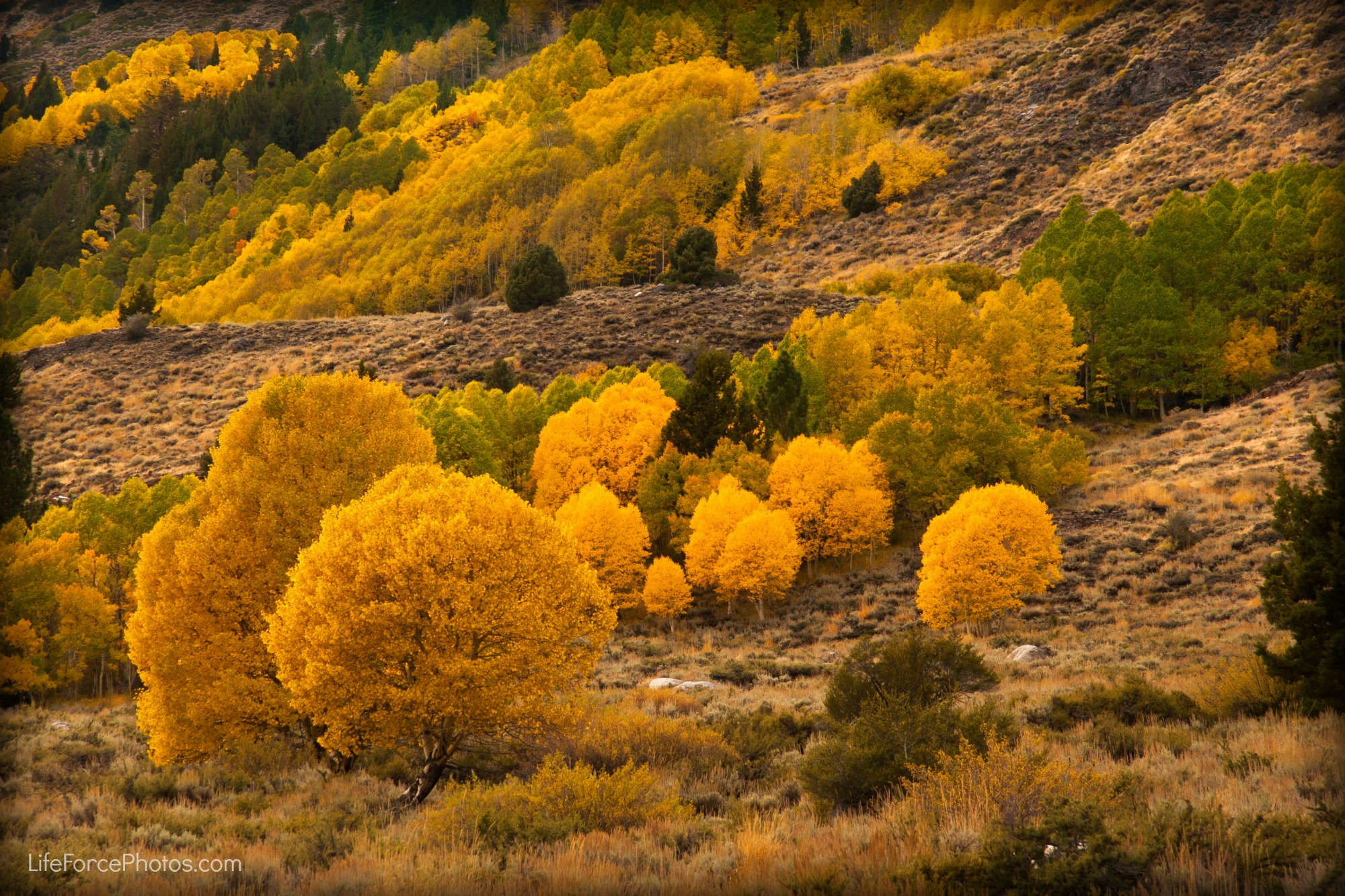 Wandering the Eastern Sierra – Leaving the Golden Forest