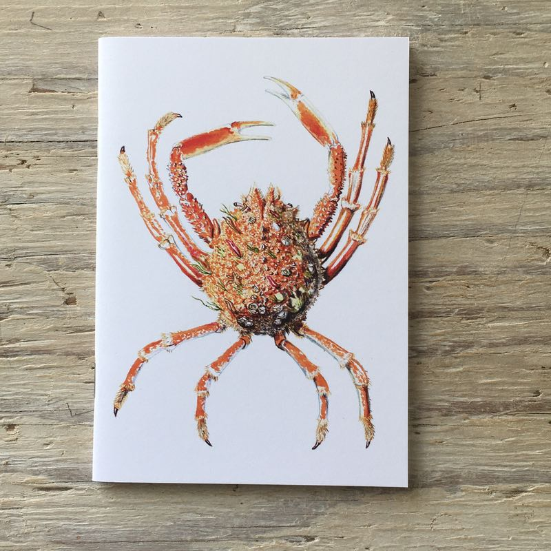 Spider crab pocket notebook
