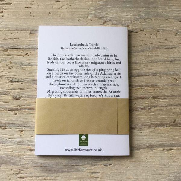 hatching leatherback turtle pocket notebook back