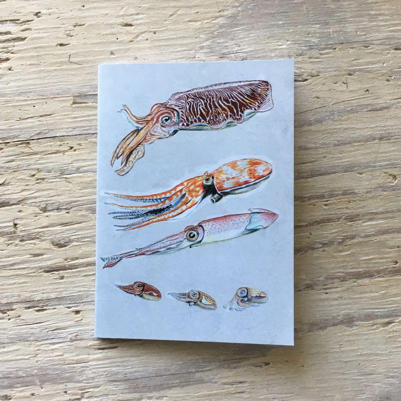 cephalopods pocket notebook
