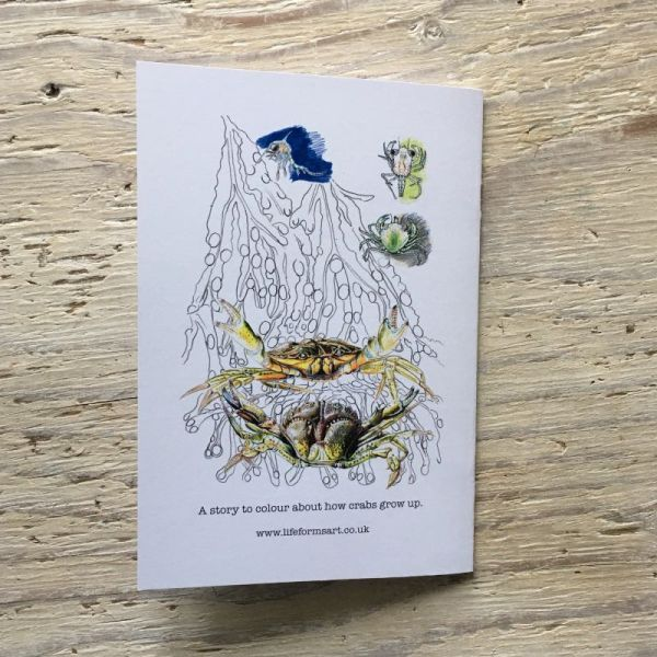 crab colouring book back