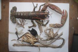 dried specimens