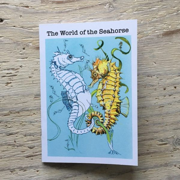 seahorse story book to colour