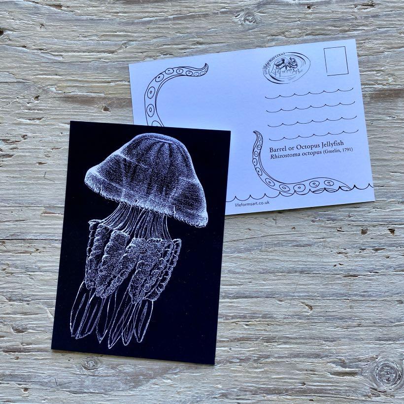 barrel jellyfish postcard