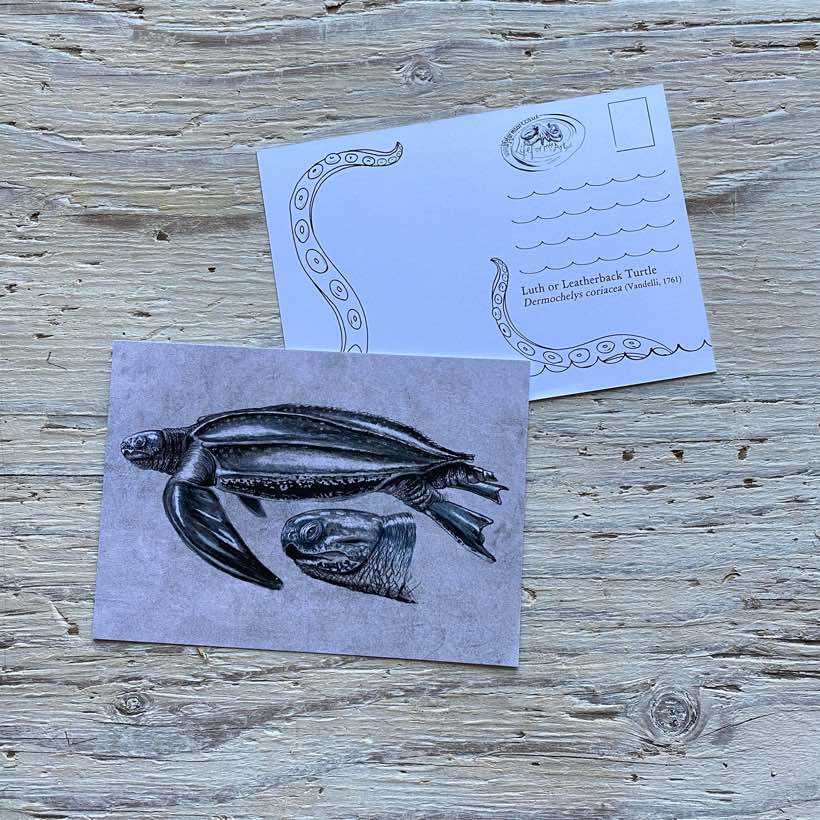 leatherback turtle postcard