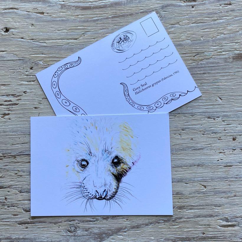 grey seal pup postcard